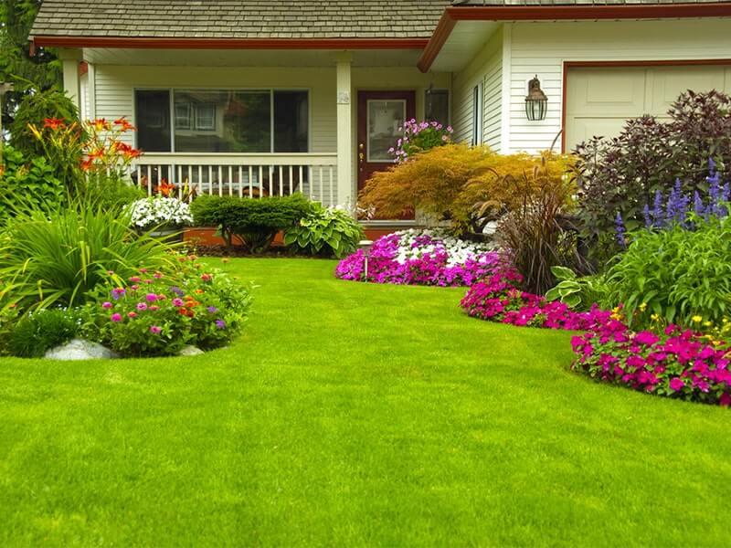 Landscape tips for summer